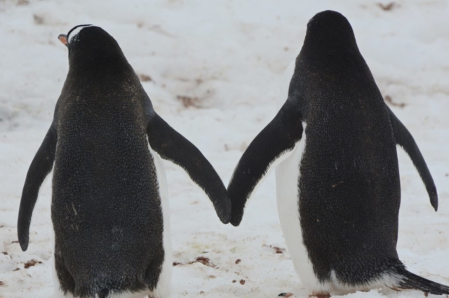 Penguin Pals in Antarctica