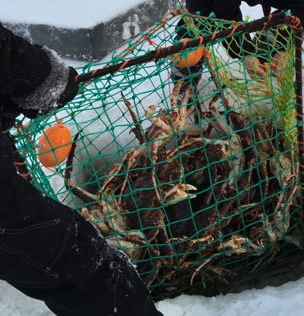 A haul of Arctic King Crab from the icy depths of a frozen fjord in Kirkenes, Finland