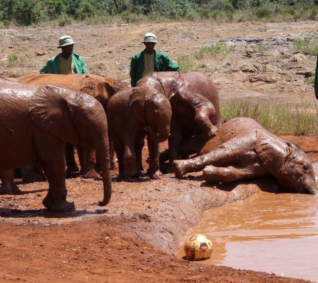Baby Elephant soccer match at Sheldrick Elephant Orphanage, Nairobi, Kenya. https://gypsyat60.com