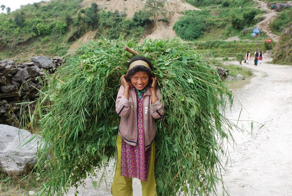 Girl carryng food for the family buffalo, Nepal. www.gypsyat60.com
