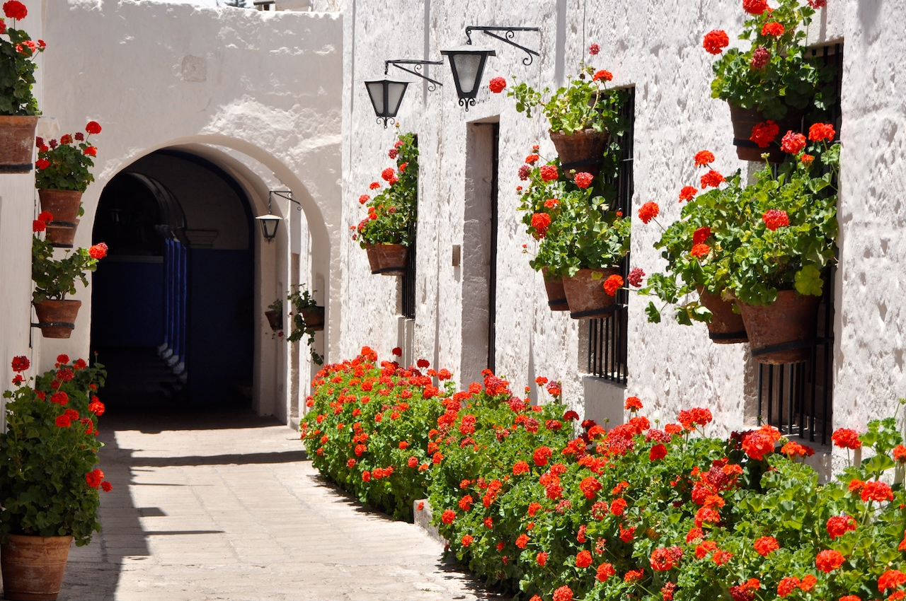 Buildings in Cordova Street, Saint Catalina Monastery made out of sillar, wine volcanic rock, at Saint Catalina Monastery. A stark contrast to masses of red geraniums. www.gypsyat60.com
