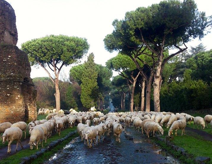 Sheep grazing on the ancient Appian Way in Rome. www.gypsyat60.com
