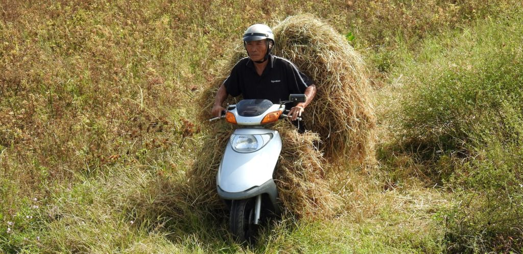 Harvested rice being transported for processing on the back of a motorbike, Ho Chi Minh, Vietnam. www.gypsyat60.com
