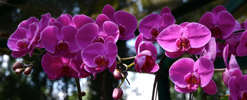 Singapore orchids. www.gypsyat60.com