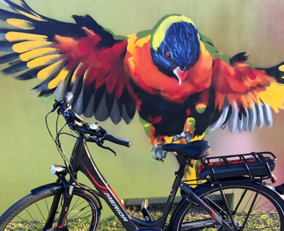 Huge parrot (artwork) admiring the Merida E-spresso (electric) City 510 bike. www.gypsyat60.com