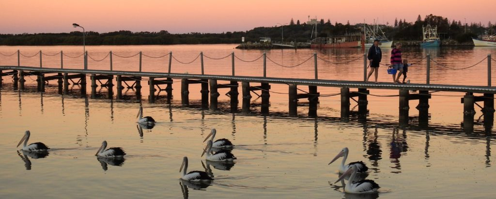 Pelicans at Yamba heading off into the sunset to roost for the night. www.gypsyat60.com