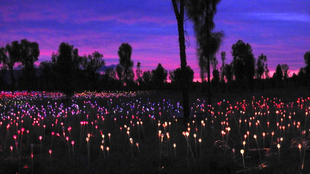 Field of Light at Sunrise, Uluru, Northern Territory. Created by artist Bruce Munro and featuring 50,000 constantly changing light stems.www.gypsyat60.com
